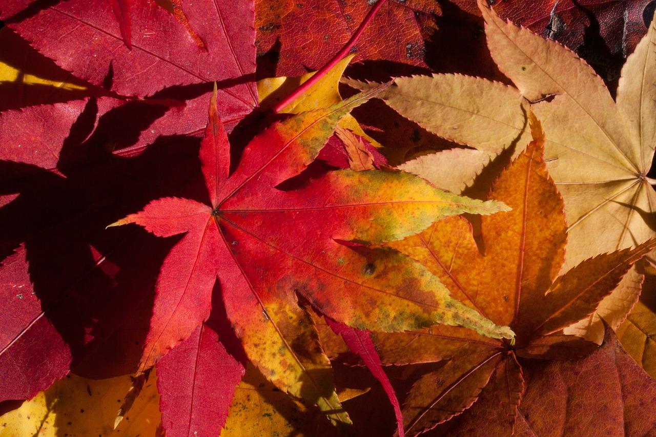 viaggi da fare in autunno